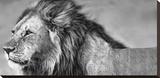 Lion Eyes Leinwand von Xavier Ortega