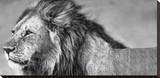 Lion Eyes Stretched Canvas Print by Xavier Ortega