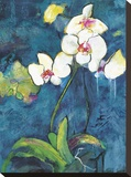Phalaenopsis II Stretched Canvas Print by Connie Tunick