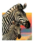 """Zebras,""June 25, 1932 Giclee Print by Jack Murray"