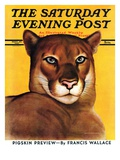 """Mountain Lions,"" Saturday Evening Post Cover, September 25, 1937 Giclee Print by August Schombrug"