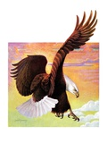 """Soaring Bald Eagle,""October 28, 1933 Giclee Print by Jack Murray"