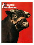 """Black Bull,"" Country Gentleman Cover, February 1, 1944 Giclee Print by Salvadore Pinto"
