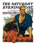 &quot;Bushel of Apples,&quot; Saturday Evening Post Cover, November 14, 1931 Giclee Print by John Sheridan