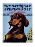 """Dachshund,"" Saturday Evening Post Cover, May 14, 1938 Giclee Print by Ivan Dmitri"