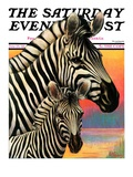 """Zebras,"" Saturday Evening Post Cover, June 25, 1932 Giclee Print by Jack Murray"