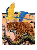 """Leopard and Parrots in Jungle,""September 2, 1933 Giclee Print by Paul Bransom"