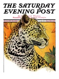 """Leopard,"" Saturday Evening Post Cover, August 29, 1931 Giclee Print by Jack Murray"