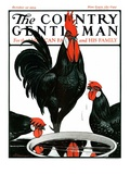 """Fowl Reflections,"" Country Gentleman Cover, October 27, 1923 Reproduction procédé giclée par Paul Bransom"