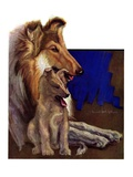 """Mother Collie and Pup,""July 15, 1933 Giclee Print by Howard Van Dyck"