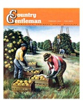 """Picking Grapefruit,"" Country Gentleman Cover, February 1, 1942 Giclee Print by John S. Demartelly"