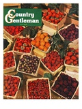 """Pints of Fruit and Berries,"" Country Gentleman Cover, July 1, 1949 Giclee Print by J.c. Allen"