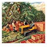 """Apple Pickers,""September 1, 1942 Giclee Print by Jackson Nesbitt"