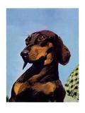 """Dachshund,""May 14, 1938 Giclee Print by Ivan Dmitri"
