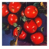 """Ripe Red Apples,""October 1, 1947 Giclee Print by Jon Fujita"