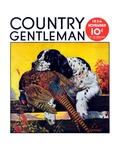 """Retriever with Pheasant,"" Country Gentleman Cover, November 1, 1934 Giclee Print by J.F. Kernan"