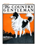"""Sheepdog Oversees Flock,"" Country Gentleman Cover, June 14, 1924 Giclee Print by Paul Bransom"