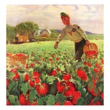 """Picking Tomatoes,""September 1, 1945 Giclee Print by John Clymer"