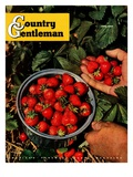 """Strawberries,"" Country Gentleman Cover, June 1, 1948 Giclee Print by J.c. Allen"