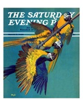 """Three Parrots,"" Saturday Evening Post Cover, March 11, 1939 Giclee Print by Julius Moessel"