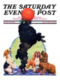 """Poodle Tricks,"" Saturday Evening Post Cover, June 19, 1926 Giclee Print by Robert L. Dickey"