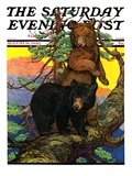 """Bears in Tree,"" Saturday Evening Post Cover, August 16, 1930 Giclee Print by Charles Bull"