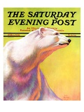 """Polar Bear,"" Saturday Evening Post Cover, February 1, 1936 Giclee Print by Jack Murray"