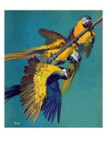 """Three Parrots,""March 11, 1939 Giclee Print by Julius Moessel"