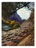 """Herding Sheep,""September 1, 1943 Giclee Print by Mike Roberts"