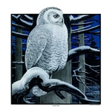 """Snowy Owl in Forest at Night,""January 12, 1924 Giclee Print by Paul Bransom"