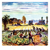 """Grape Pickers,""October 1, 1942 Giclee Print by Phil Dike"