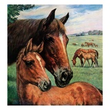 """Mares and Foals,""May 1, 1947 Giclee Print by Francis Chase"