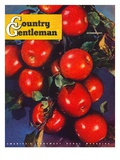 """Ripe Red Apples,"" Country Gentleman Cover, October 1, 1947 Giclee Print by Jon Fujita"
