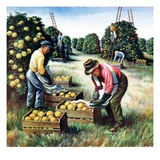 """Picking Grapefruit,""February 1, 1942 Giclee Print by John S. Demartelly"