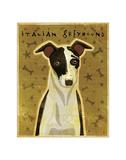 Italian Greyhound (Black & White) Giclee Print by John Golden