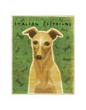 Italian Greyhound (Fawn) Giclee Print by John Golden