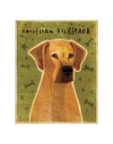 Rhodesian Ridgeback Giclee Print by John Golden