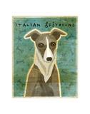 Italian Greyhound (White & Grey) Giclee Print by John Golden