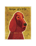 Irish Setter Giclee Print by John Golden