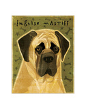 English Mastiff Giclee Print by John Golden