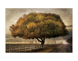 Autumnal Landscape Giclee Print by David Winston