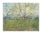The Pink Orchard, 1888 Reproduction procédé giclée par Vincent van Gogh