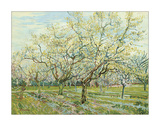 The White Orchard, 1888 Giclee Print by Vincent van Gogh