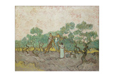 Women Picking Olives, 1889 Giclee Print by Vincent van Gogh