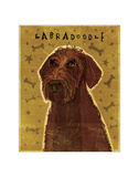 Chocolate Labradoodle Giclee Print by John Golden