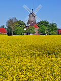 Rapeseed Field in Carolinensiel Photographic Print by  Boyungs