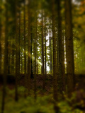 Ray of Sunshine in the Autumn Woods Photographic Print by Johannes Bernhard