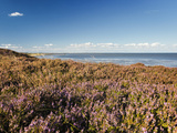 Braderuper Heath on the Island of Sylt Photographic Print by Beate Zoellner