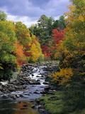 Autumn Forest Fotodruck von  Weyers