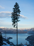 Single Tree at Walchensee Photographic Print by Bernd Juergens